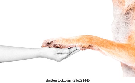 Dog paw and hand (color and gray)