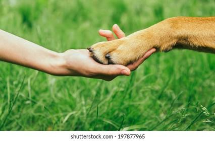 Dog paw and human hand are doing handshake on nature, friendship