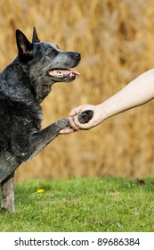 dog paw and human hand shaking as a sign for  friendship