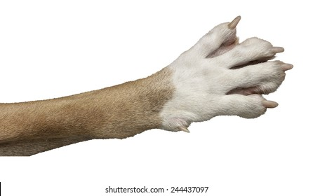 dog paw isolated images stock photos vectors shutterstock