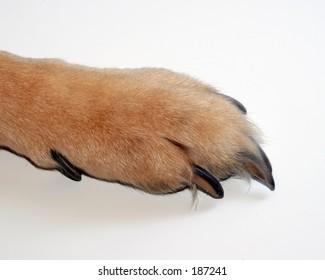Dog Paw Macro