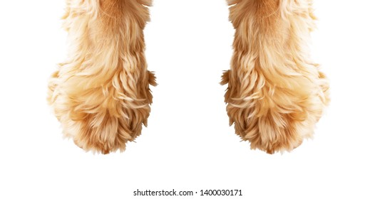 Dog paw on a white background