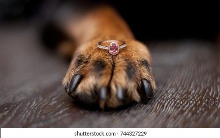 Dog paw with pink sapphire engagement ring. Calgary, Alberta, Canada.
