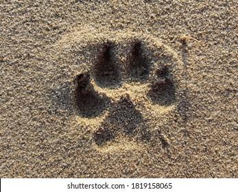 Dog paw print in beach sand