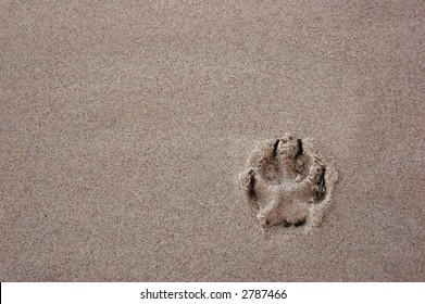 42a919436 Dog paw print in the beach sand