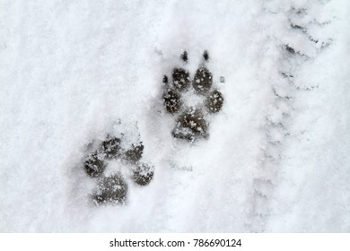 Dog paw print in snow