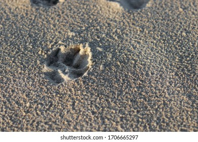Dog paw printed on the sand