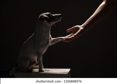 Dog paw takes the man. People support pets