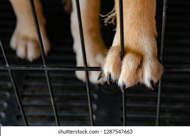 Dog paws close up with nails on black cage background. Rabies dog or hydrophobic concept.