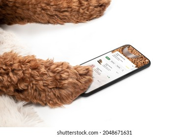 Dog paws with food delivery app on phone. Labradoodle dog is using a smartphone with pet themed food or grocery delivery order screen. Funny concept for takeaway or online ordering. Selective focus.