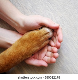 Dog paws and human hand close up, top view. Conceptual image of friendship, trust, love, the help between the person and a dog.