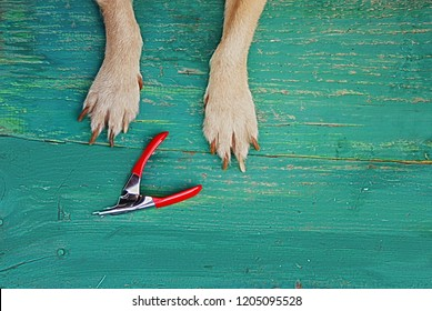 Dog paws with long claws and Nail Clipper Grooming on a wooden background