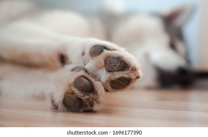Dog paws with pads on a light floor. Dog paws resting