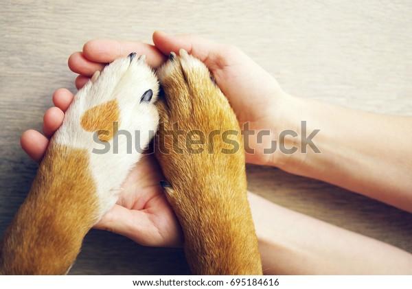 Hundepaws mit einem Punkt in Form von Herz und menschlicher Hand, Nahaufnahme, Draufsicht. Konzeptuelles Bild von Freundschaft, Vertrauen, Liebe, der Hilfe zwischen Mensch und Hund