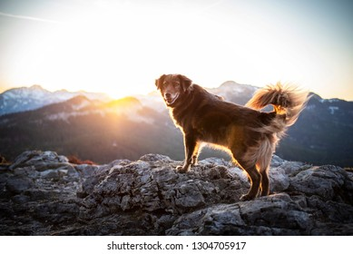 Dog at the peak during sunrise. Dog in the mountains. Hiking with dogs.