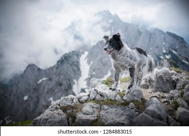 Dog at the peak of a mountain. Hiking with dogs. Adventures with dogs.