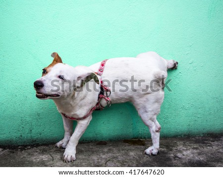 Dog peeing on colorful