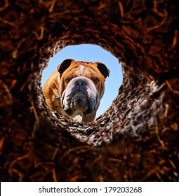 a dog peeking into a dirt hole in the ground