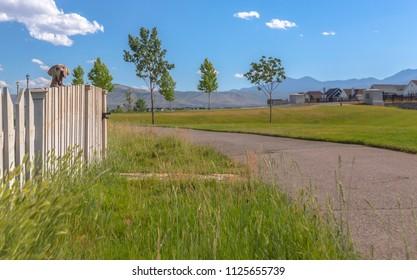 Dog peeking over white picket fence