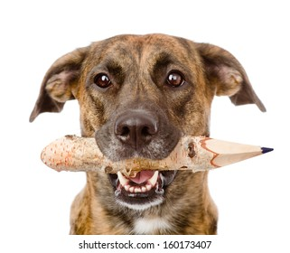 dog with a pencil. isolated on white background