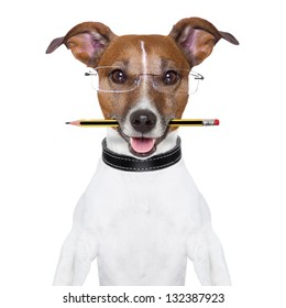 dog with pencil in mouth and glasses