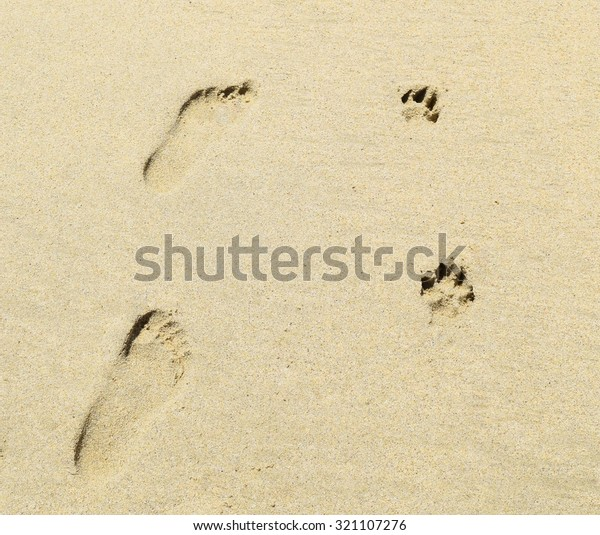 Dog and people  footprints (foot prints) side by side leave impressions in the sand at a beach in California.