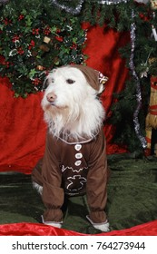dog. pet dressed as father-christmas wishing a merry christmas