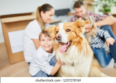 Dog as a pet and friend when moving with family to the new home