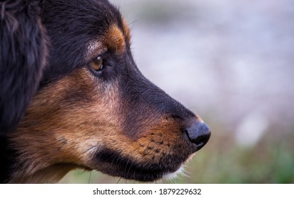 Dog photographed from profile. Dog's head and snout