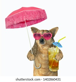The dog in pink sunglasses drinks cold tea under an umbrella. White background. Isolated.