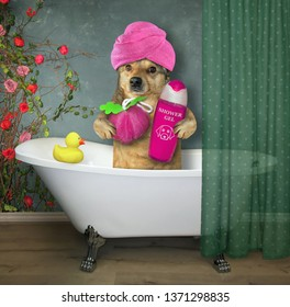 The dog with a pink towel around his head is taking a bath. It holds a sponge and shampoo.
