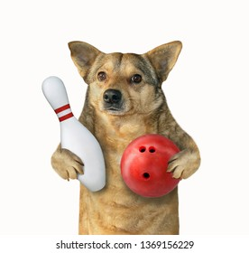 The dog player is holding a red bowling ball and a pin. White background. Isolated.