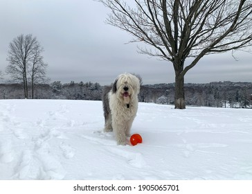 Dog playing with ball in the snow