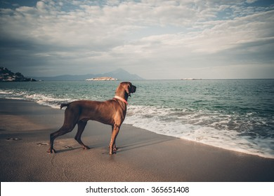Dog playing at the beach on summer holidays