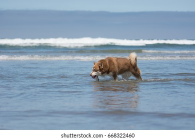 Dog Playing Fetch at the Beach