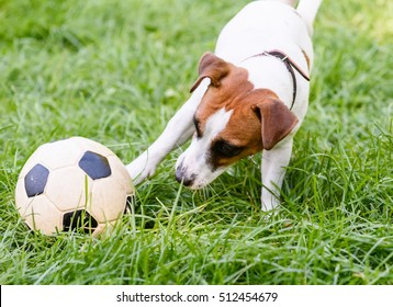 Dog playing with football (soccer) ball with its paw