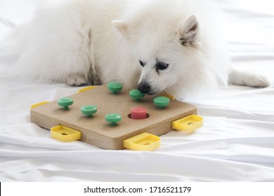 Dog playing Intellectual game. Training game for dogs.