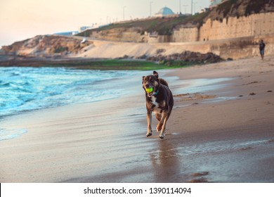 A dog is playing om a beach with a ball