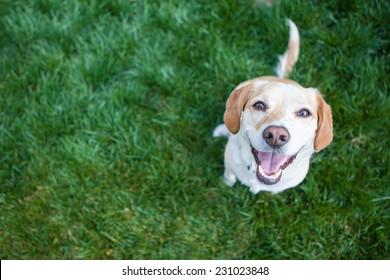 Pies gra na zewnątrz uśmiechy