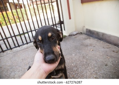 dog playing with owner head in hand