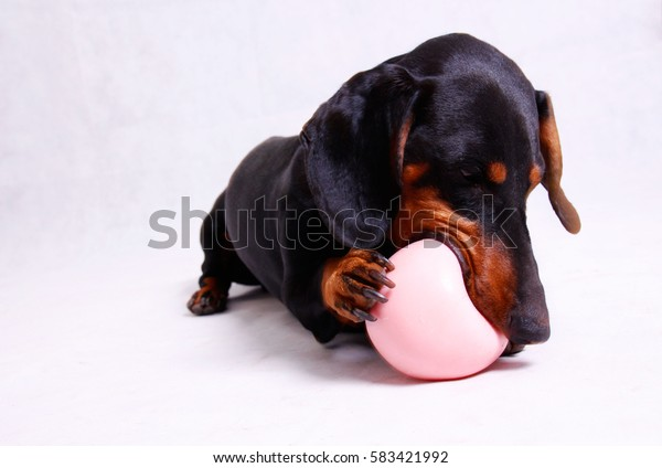 A dog playing with a Pink ball