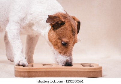 Dog playing sniffing puzzle game for intellectual and nosework training