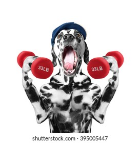 Dog playing sports with dumbbells