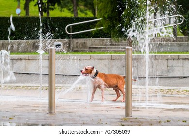 Dog playing in the waterfall in summer heat
