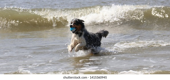 Dog plays with the sea waves