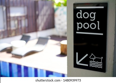 Dog pool sign in the hotel