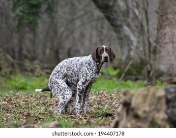 dog pooping outside in the woods or park