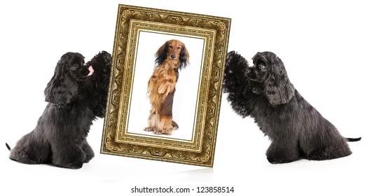 dog portrait in a gold frame