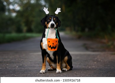 dog portrait holding a basket for Halloween