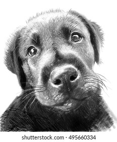 Dog portrait. Illustration in draw, sketch style